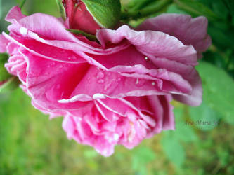 Kiss from a rose by OwaranaiYume