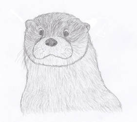 Otter Face by Wydran