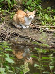 Waterside Watcher by Kerl-of-Fox-County
