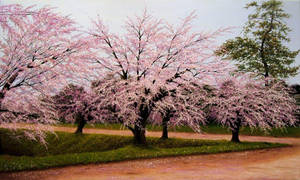 'Cherry blossoms' by sezartstudio