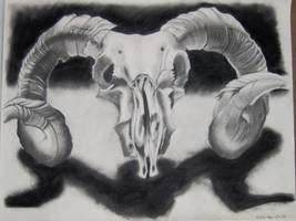 Ram Skull by clew0002