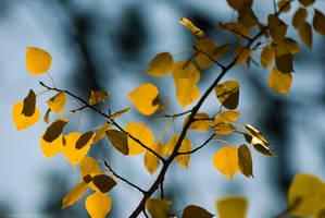 Autumn Colors - Modified by acidflow