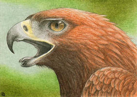 ACEO for Siluan by Dragarta