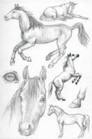 ASP3: Arabian horse by Dragarta