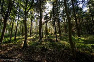 Forest light by johnleewheatley