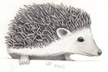 Hedgehog by swanofgrey