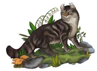 American Curl by ANicB
