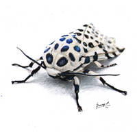 Giant Leopard moth by Sunima
