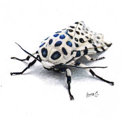 Giant Leopard moth by Sunima