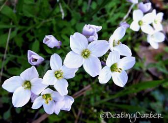 Macro Wildflowers 1 by Destiny-Carter