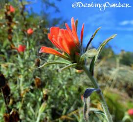 Macro Wildflowers 2 by Destiny-Carter