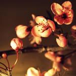 Cherry by fruitmonkey
