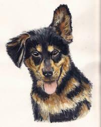 German Shepard Puppy by LilyRaine
