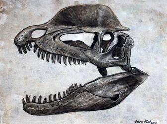 Dilophosaurus Skull by watjong