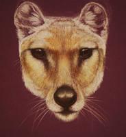 Thylacine WIP by afiriti