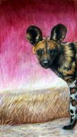 Painted Dog by afiriti