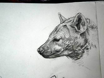 Hyena by afiriti