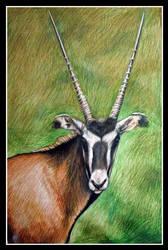 Fringe-Eared Oryx by afiriti