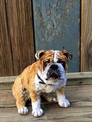 Pipe Cleaner Bulldog by afiriti