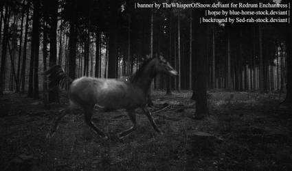 Trotter In Woods by TheWhisperOfSnow