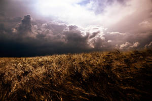 storm is coming II by gbog