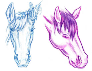 Horse Portraits by NynjaKat