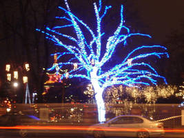 Tree at christmas time by Annette2