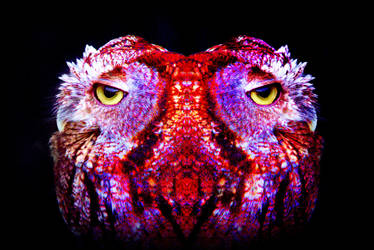 psychedelic owl by nehpets