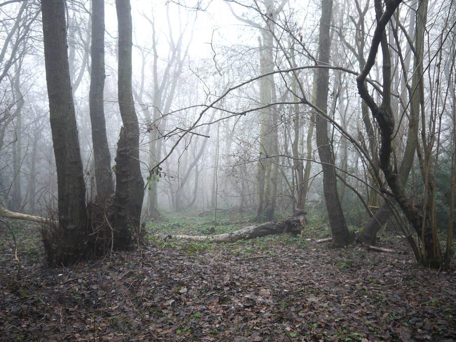 dark forest stock by HumbleBeez
