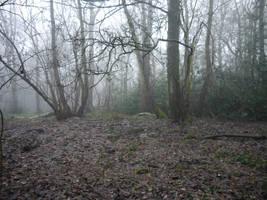 dark forest background stock by HumbleBeez