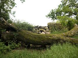 Fallen tree stock 1 by HumbleBeez