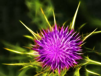 Thistle5 by mahesh69a