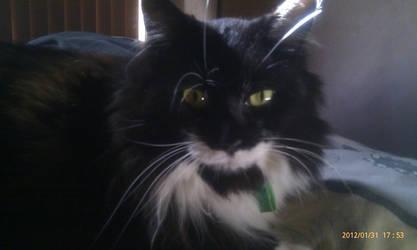 Kitty by Deborahs-Conscience