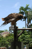 Palm Beach Zoo 6 by mirandaadria-stock