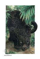 Black Jaguar - Wild Cats Deck by KaceyM