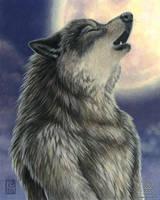 Rising Moon by KaceyM
