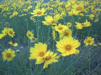rapunzell - stock flower 01 by rapunzell-stock