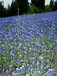 rapunzell - stock flower 05 by rapunzell-stock