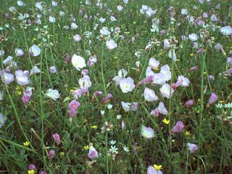 rapunzell - stock flower 07 by rapunzell-stock