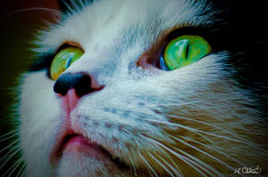 Green Eyes by Spid4