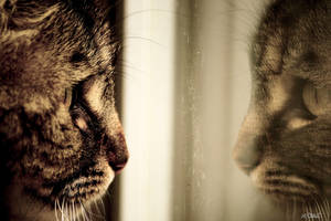 Reflexion cat by Spid4