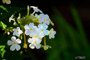 Une touche de blanc by Spid4