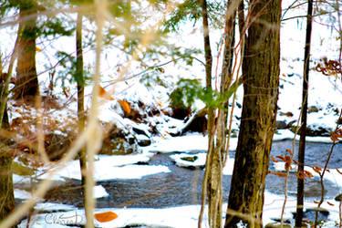 Winter Wonderland by Spid4