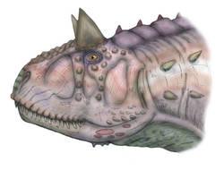 Carnotaurus head by maniraptora