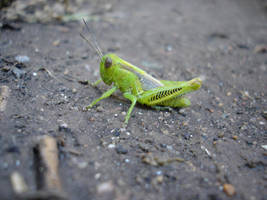 Grasshopper 2 of 3 by soliton