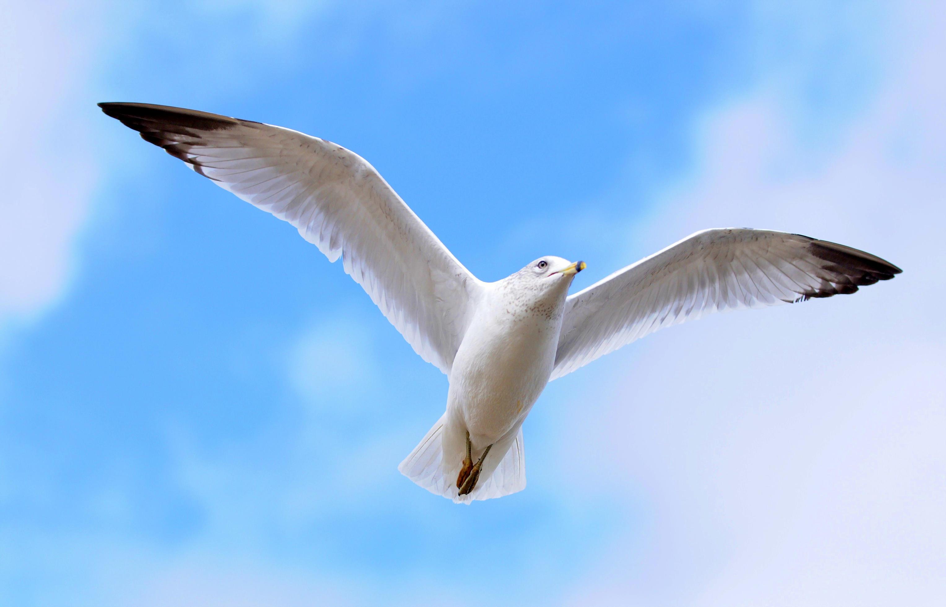 Sea Bird stock by JSF1