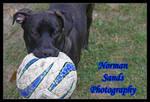 Natasha and her ball by ratdog420
