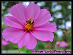 Flower with Bee by ratdog420
