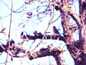 hidden bird by chinoceja