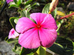 Pink Flower 1 by VGStock